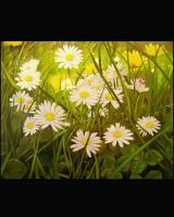 Daisies by maxine