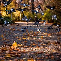 Pidgeons Rising by drkshp
