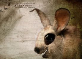 4tavsan-rabbit by owger