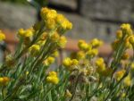 Little yellow buttons by BrendanR85