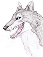 Grey Wolf by GG-lover