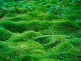 Grass Field by Starna