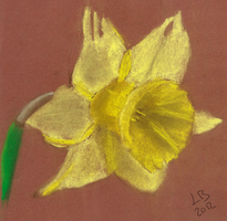 Daffodil 1 by RichDoes