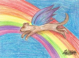Over the Rainbow - For Sale - by TheFlyinFerret