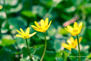 sign of spring... by Iulian-dA-gallery