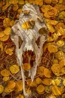 Skull and Autumn Leafs by mjohanson