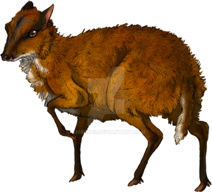 Red Mouse Deer + Video by Aminirus