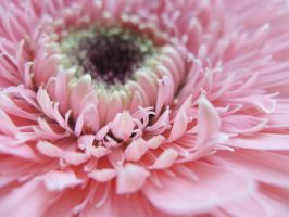 flower_ by limit-of-dreams