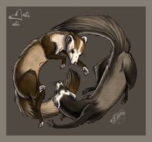 Ferret Play by Krissyfawx