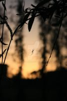 Spider Silhouette by twilliamsphotography