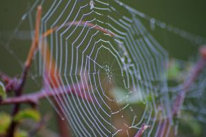 Spiders Web by robertbeardwell