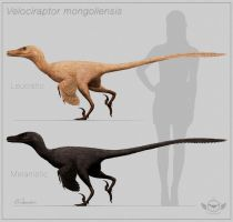 Velociraptor mongoliensis - color variation by ChrisMasna