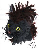 APG the Cat by Heather-Briana