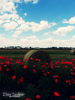 hay bale between the poppies by szdora91
