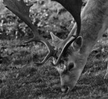 A Deer by Xs9nake
