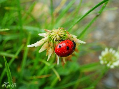Lady Bug by Horlf