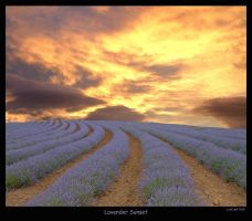 Lavender Sunset by gearbox