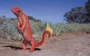 Real Charmander by pippin1178