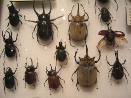 Beetles by racehorse87-stock