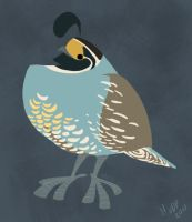 Daily Design: Quail by sketchinthoughts