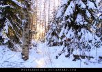 winterland by woodlandSTOCK
