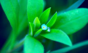 small flower by jagerion