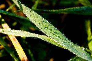 The Morning Dew by DrDnar