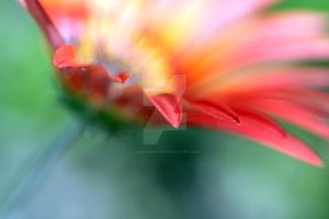 Blossom Contest May 2012: Flowers in sunlight by aldestmartin