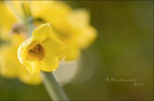 Soft Tones by ILTBY