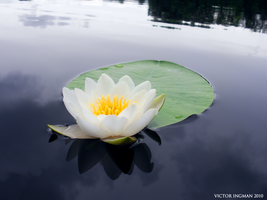 Water-Lily - Canoetrip by xeloader