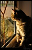 Cat_Profile V by DianaLobriglio