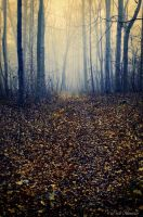 Spilled path . by Phototubby