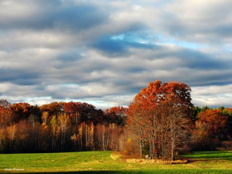 Last Fall by cfree220