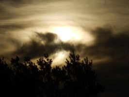Tree, Cloud, Sky by PamplemousseCeil