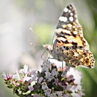 Butterfly 2 by OlgaC