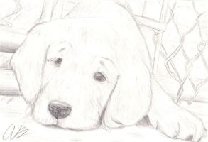 Lonely Puppy by Tobi-Teh-Great