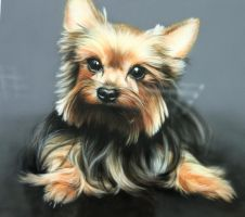 Airbrushing dog by ArtKleo