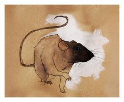 Rat_Black_1 by Duffzilla
