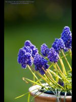Spring Flowers III by GMCPhotographics