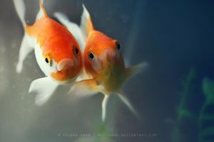 Two by nhuthanh