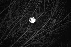 Moon in black and white by capturedpoetry