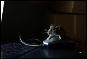 Get off my mouse... mouse by KevinMaistros
