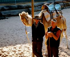 Camel show by jacobjellyroll