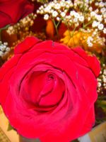 Red Red Rose by metalchick200615