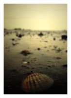 shell.alone. by Flamix