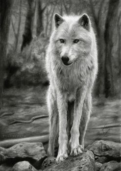 Wolf by Thubakabra