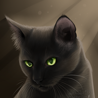 Hollyleaf - Warriors by Wolfhowler9880