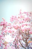 Blossoms Against a Blue Sky by Figgy5119