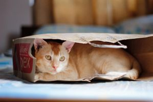 Living in bag!! by badhon
