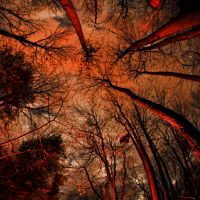 Mystic forest by jfdupuis